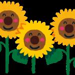 flower_sunflower
